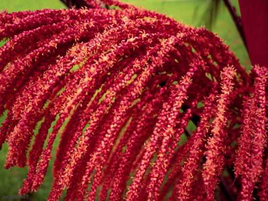 عکس زیباترین گل های جهان - AksFa.Net - عکسفا