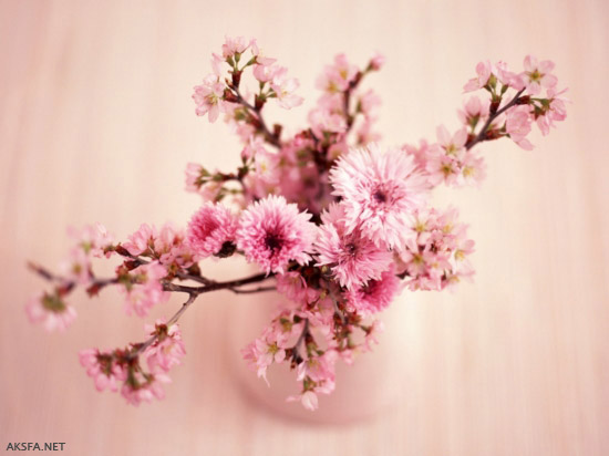 زیباتریت گل های جهان    گل شقایق+گل رز+گل سوسن