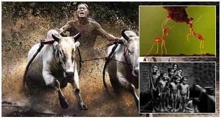 عکس های برتر مسابقات عکاسی سونی 2011